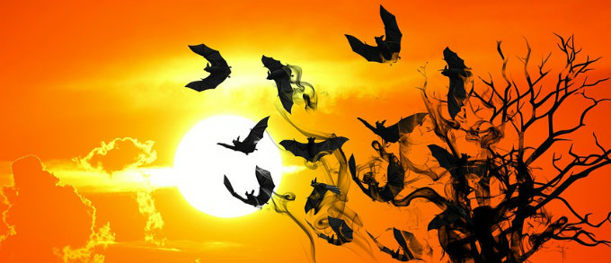 Bats flying on sunset