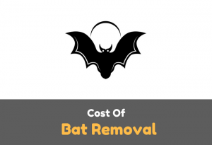 Bat Removal Cost