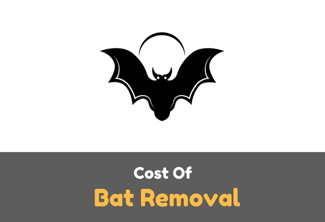How Much Does Bat Removal Cost