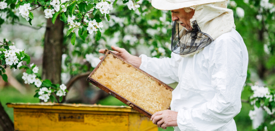a beekeeper taking hive