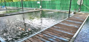 water gushing out of koi pond fish farm