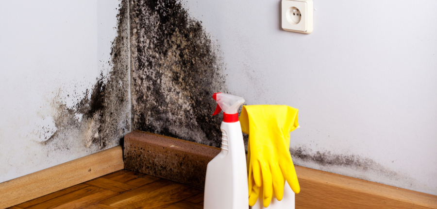 How Much Does Mold Removal Cost?